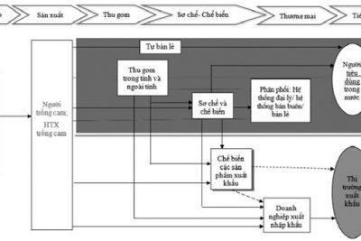 Xây dựng mô hình chuỗi cung ứng cam sạch của tỉnh Hà Giang