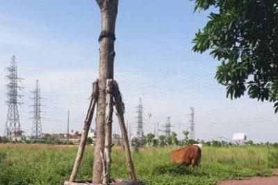 Dự án TNR Stars Đồng Văn: Đất chưa cấp sổ đỏ đã thế chấp tại Ngân hàng MSB