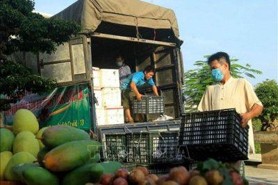 Tránh 'đứt gãy' vận chuyển hàng hóa mùa dịch
